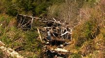A Stream Choked With Logging Debris.