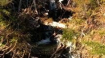 A Stream Clogged With Clear Cut Logging Debris