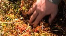 Rainforest: Sphagnum Moss