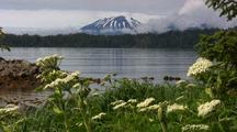 Mt. Edgecumbe Volcano & Cow Parsnip Flowers