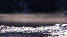 Fog Drifts Down A Stream