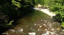 Salmon Spawning In A Stream