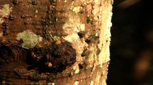 Flies On Tree Bark