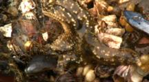 Abstract Pan Of Star Fish, Mussels, Kelp, And Othe Invertebrates