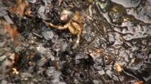 Blenny Eel And Hermit Crabs