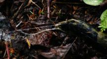 Following The Slime Trail Of A Slug