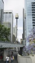 Monorail With Sydney Tower
