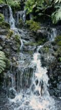 Waterfall In National Orchid Garden