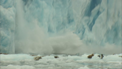 Glacier Calves Behind Seals Aca
