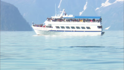 Whale Watching Stock Footage
