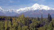 Tilt Up Boreal Forest In Early Fall Yellow To Mt Denali, Denali Mountain, Mt. Mckinley, North Americas Tallest Peak Alaska