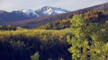 Zoom Out Tilt Up From Beautiful Fall Boreal Forest Colors To Snowy Mountains In The Distance