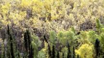 A Mix Of Deciduous And Coniferous Evergreen Trees Sway In The Wind Of Interior Alaska Boreal Forest Tiaga. Alaska Cineflex Aerial Zatzworks