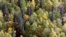 Tilt To Overhead Mix Of Deciduous And Coniferous Evergreen Trees In The Wind Of Interior Alaska Boreal Forest Tiaga. Alaska Cineflex Aerial Zatzworks