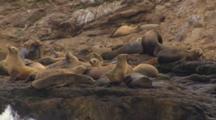 Cineflex shots of california sea lions on farallon islands