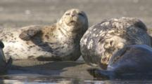 Cineflex stabilized marine footage of harbor seals, sea otters, pelicans, egrets, waterfowl, along California Monterey coast