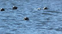 Harbor Seals In Sparkling Water