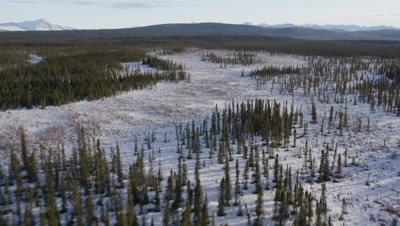 Aerial,over vast Alaska forest wilderness dusted in snow
