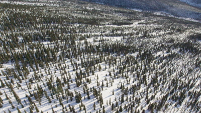 Aerial Over Vast,Forested Wilderness in snow