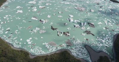 Low Aerial Over Forest and Icebergs In Glacier Bay National Park