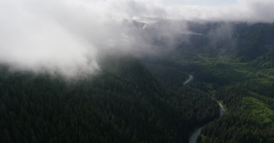 Aerial Through Low Clouds Over Coniferous Forest and River In Alaska