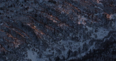 Aerial Looking Down on Spruce Forest in Snow Lit up By Sunset or Sunrise colors