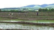 Tilt Up From Water To Reveal Rice Farms In China