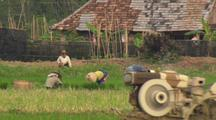 Farm Workers In Rice Field And Tractor Enters Frame Industrialization China