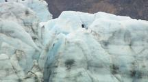 Bald Eagle Perched On Glacier Alaska Wildlife Birds Cold Feet