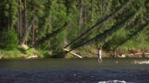 Interior Alaska Forest Flyfisherman Flyfishing Alaska Reveal Wide Shot