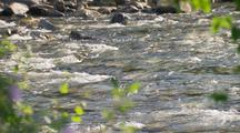 Interior Alaska Rivers Rack Focus From Pink Flowers To Clear Sparkling River