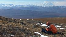 Dall Sheep And Wildlife Viewer Watching Animals Ecotourism Travel Alaska Film Commission