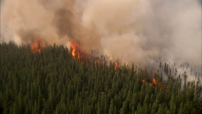 Fire Raging In Alaska Forest Red Flames