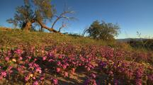 Desert Wildflowers And Shrubs