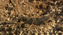 Green Sea Turtle Hatchlings Dig Out Of Nest Heading To Ocean Baby Turtles Hurry To Water