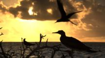 Seabirds on tropical island at sunrise and sunset boobies, terns, frigate birds ocean surf