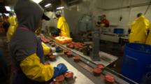Workers On The Canned Salmon Line At A Fish Processing Plant