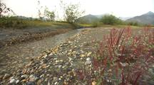Clear Alaska Wild River, Clear Water Flowing, Pan From Fireweed Plants To Reveal River