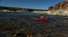 Wide Shot Low Angle Spawning Dying Red Salmon End Beginning Of Life