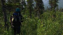 Hiker Walks Through Brush And Forest Gates Of The Arctic National Park