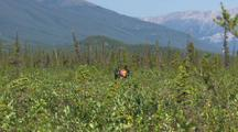 Hikers Backpackers Walk Through Brush And Landscape Gates Of The Arctic National Park