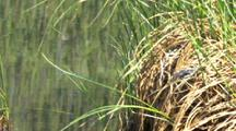 Bluet Damselflies Flit Around Grass And Pond Gates Of The Arctic National Park