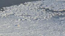Polar Bear Struggles To Walk On Thin Ice