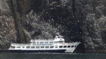 Pull From Alaska Cliff Face To Reveal Kenai Fjords Tourboat Drifts Past Seabird Rookery