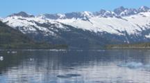 Sea Otters Hauled Out On Glacier Ice Icebergs Wide Shot Of Coastal Alaska Landscape