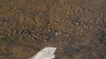 Arctic Aerial Cineflex Wide Shot Golden Tundra Hills Arctic Landscape Push To Caribou Migrating Across Tundra Long Shadows
