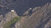 Aerial Cineflex Mountain Goat And Kid Stand On High Mountain Peak Zoom To Wide Shot Of Dramatic Mountain Realm