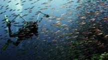 Photographer Shoots School Of Fish Over Coral Reef