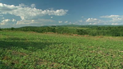 Soybean Field (Time Lapse)