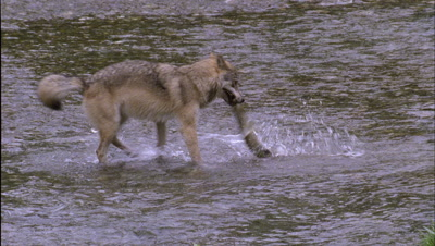 Wolf Fishes River